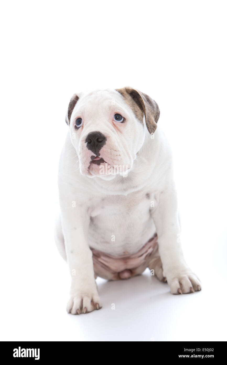 Dog with an abject expression saying sorry Stock Photo