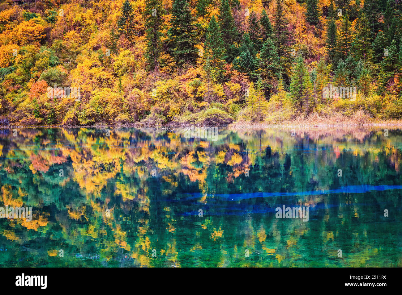 fall colors in lakefront - Stock Image