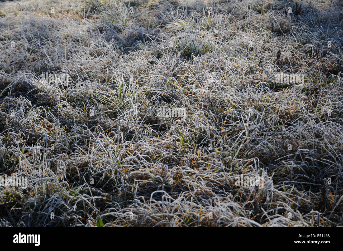 Ice-crystals on grasses - Stock Image