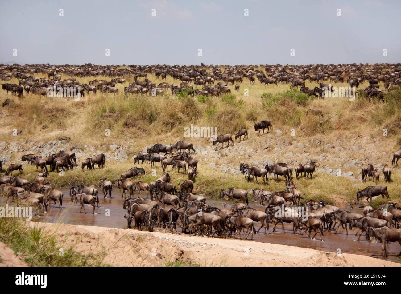 Great Migration - Stock Image