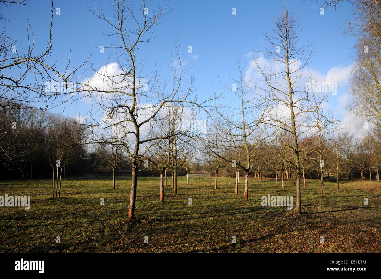 Fruit trees - Stock Image