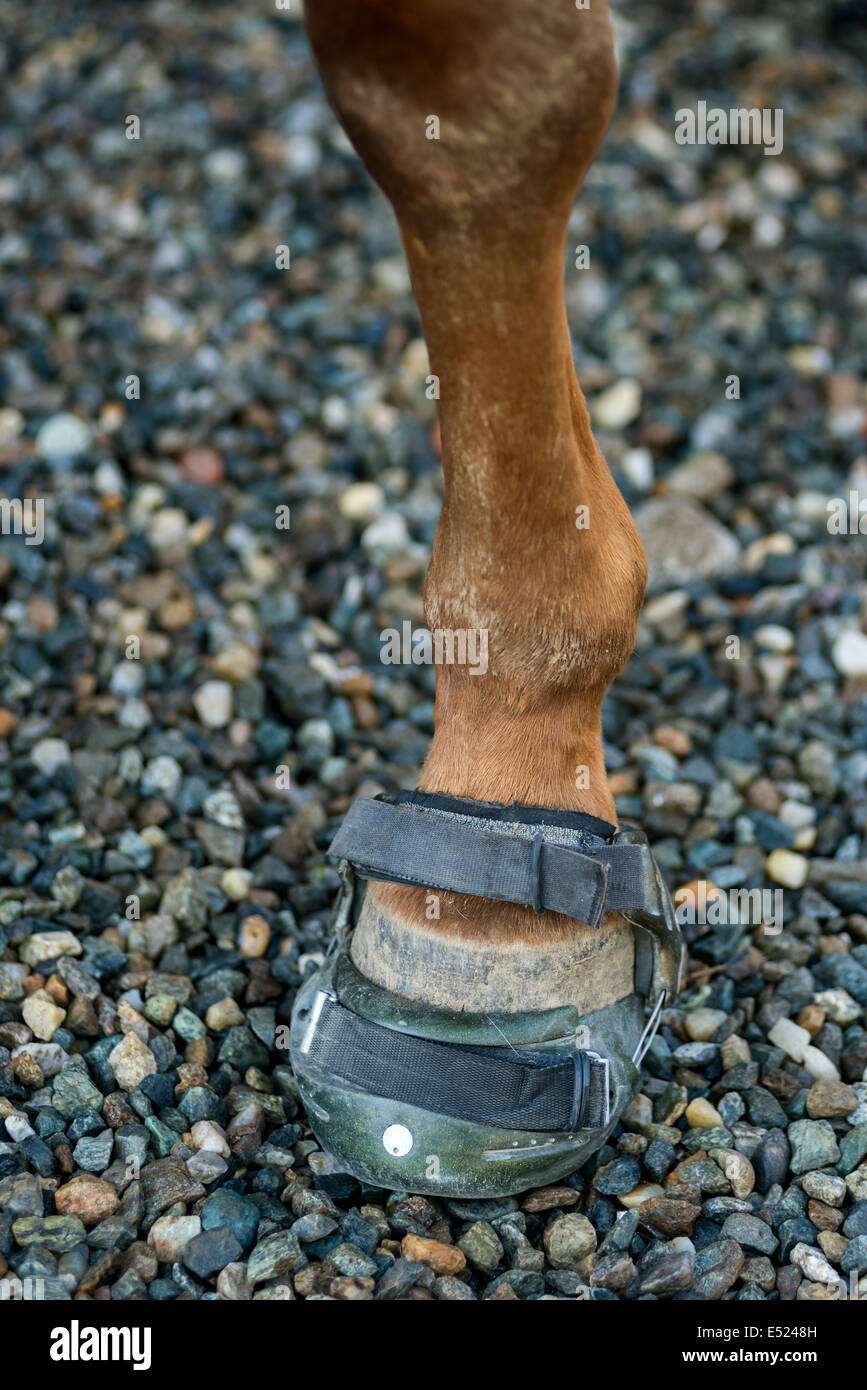 Horse boots for barefoot hooves - Stock Image