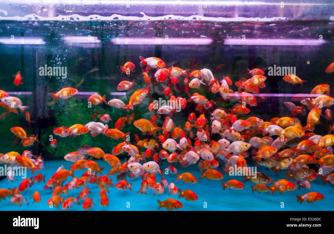 Fishes in a fishbowl at Mongkok market in Hong Kong Stock Photo ...