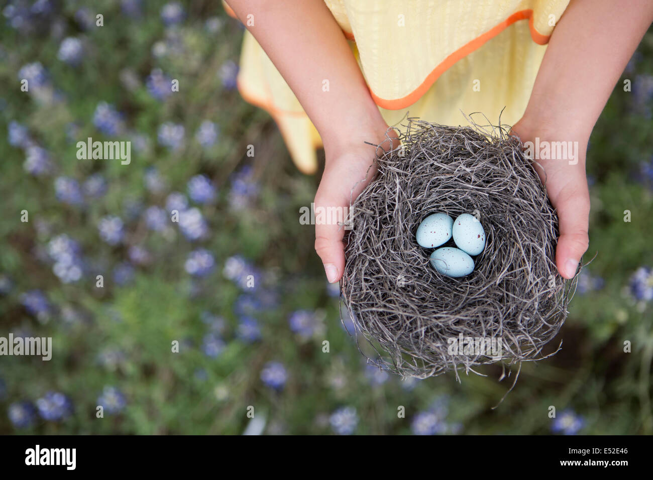 A young girl holding out a woven bird nest with three small eggs. - Stock Image