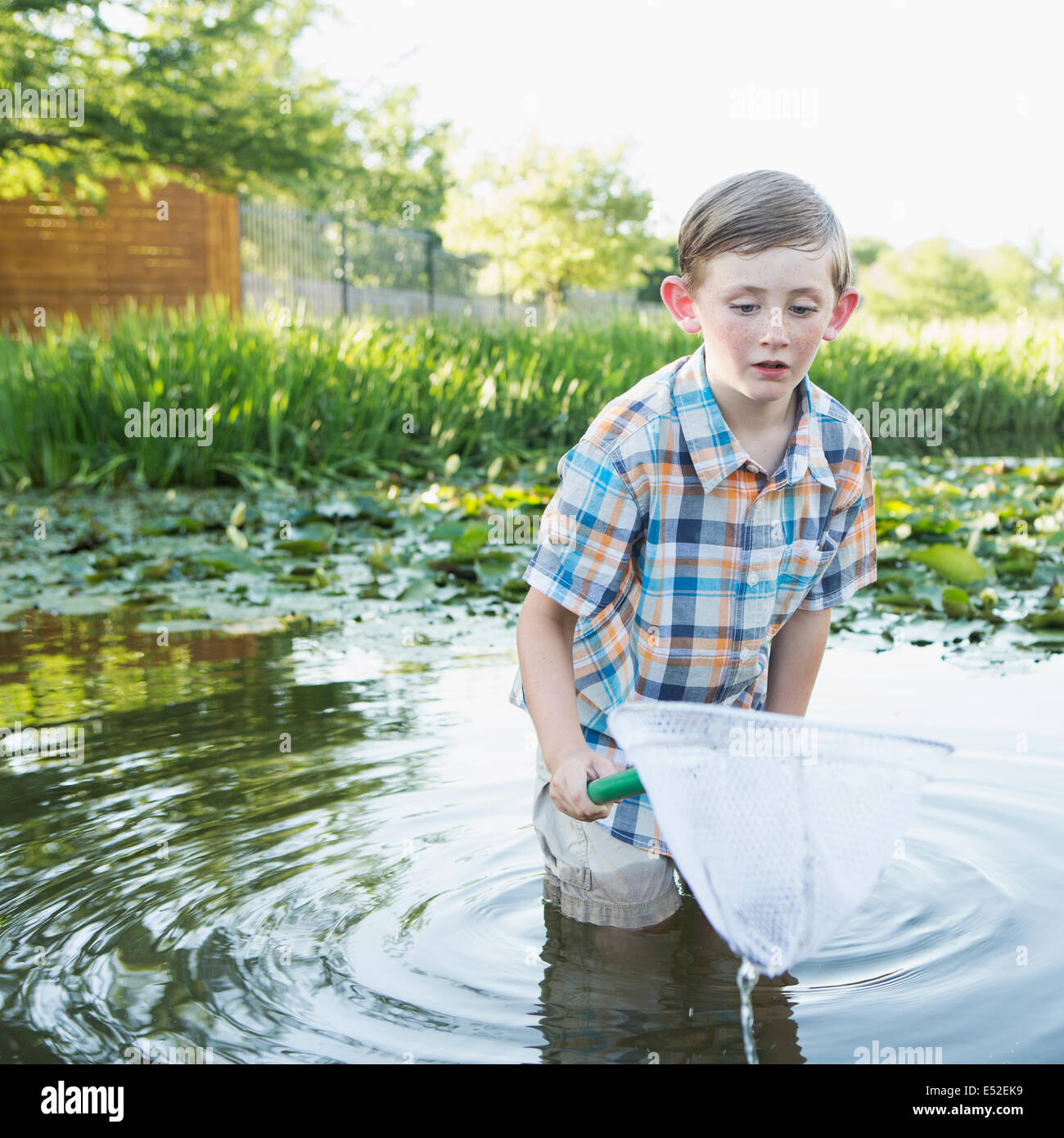 A young boy standing thigh deep in water, with a fishing net. - Stock Image