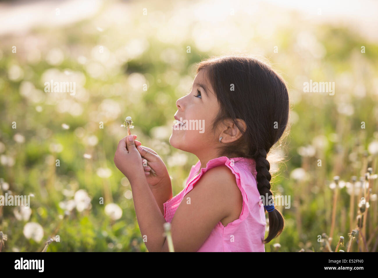 A young child in a field of flowers, blowing the fluffy seeds off a dandelion seedhead clock. - Stock Image