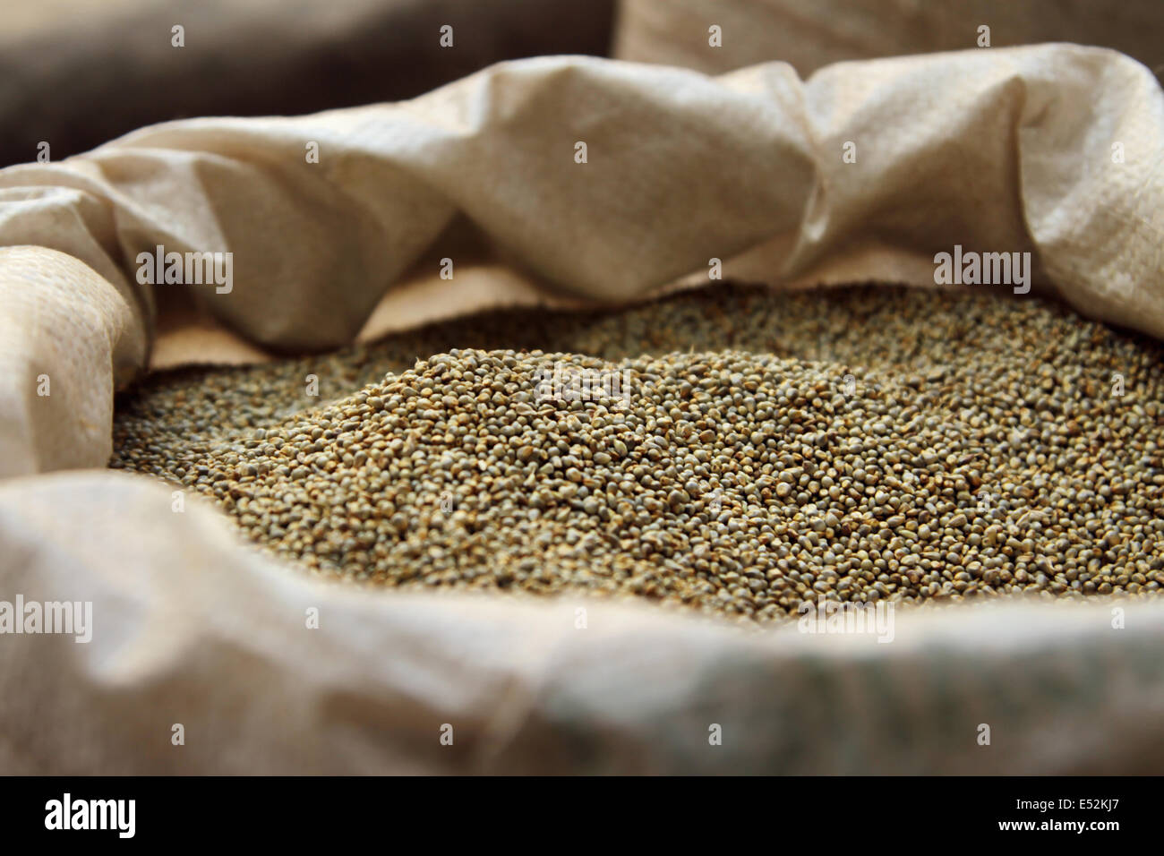 Sack full of bajra for sale - Stock Image