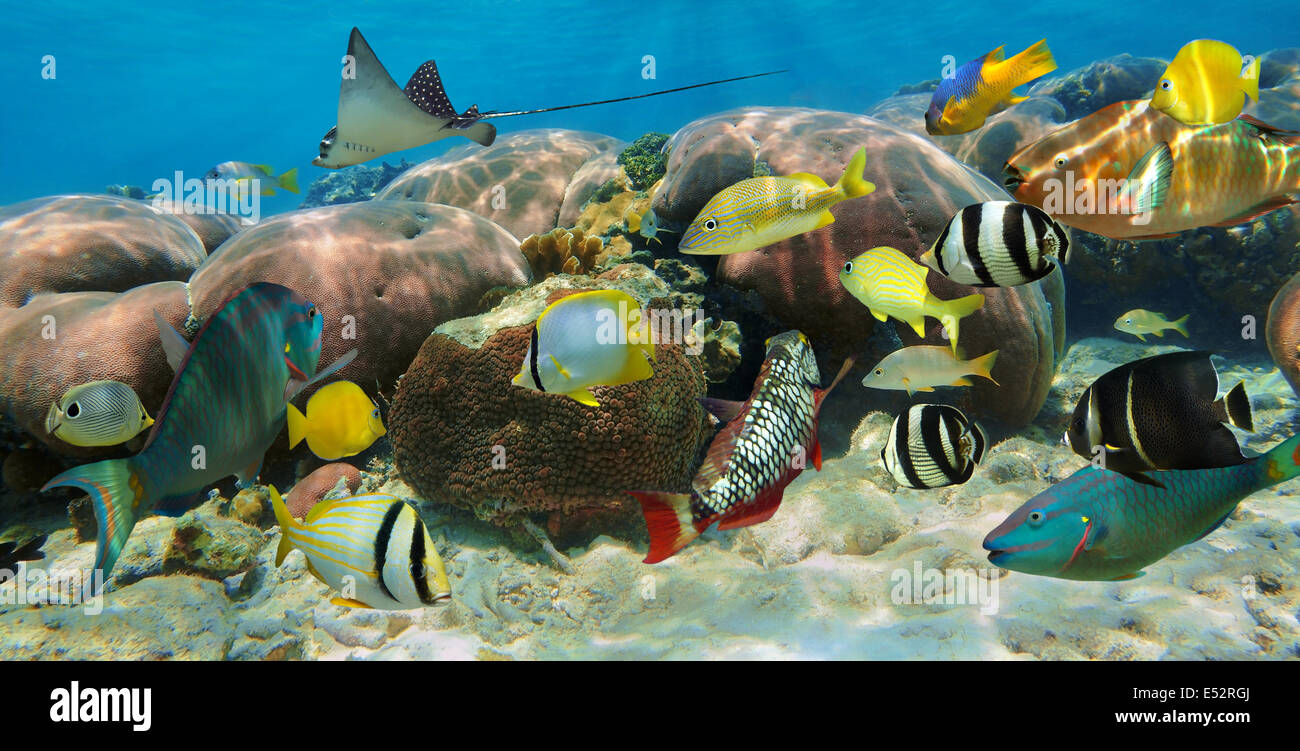 Underwater panorama in a coral reef with colorful tropical fish ...