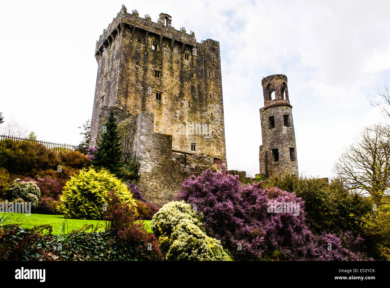 Irish castle of Blarney , famous for the stone of eloquence. Ireland Stock Photo