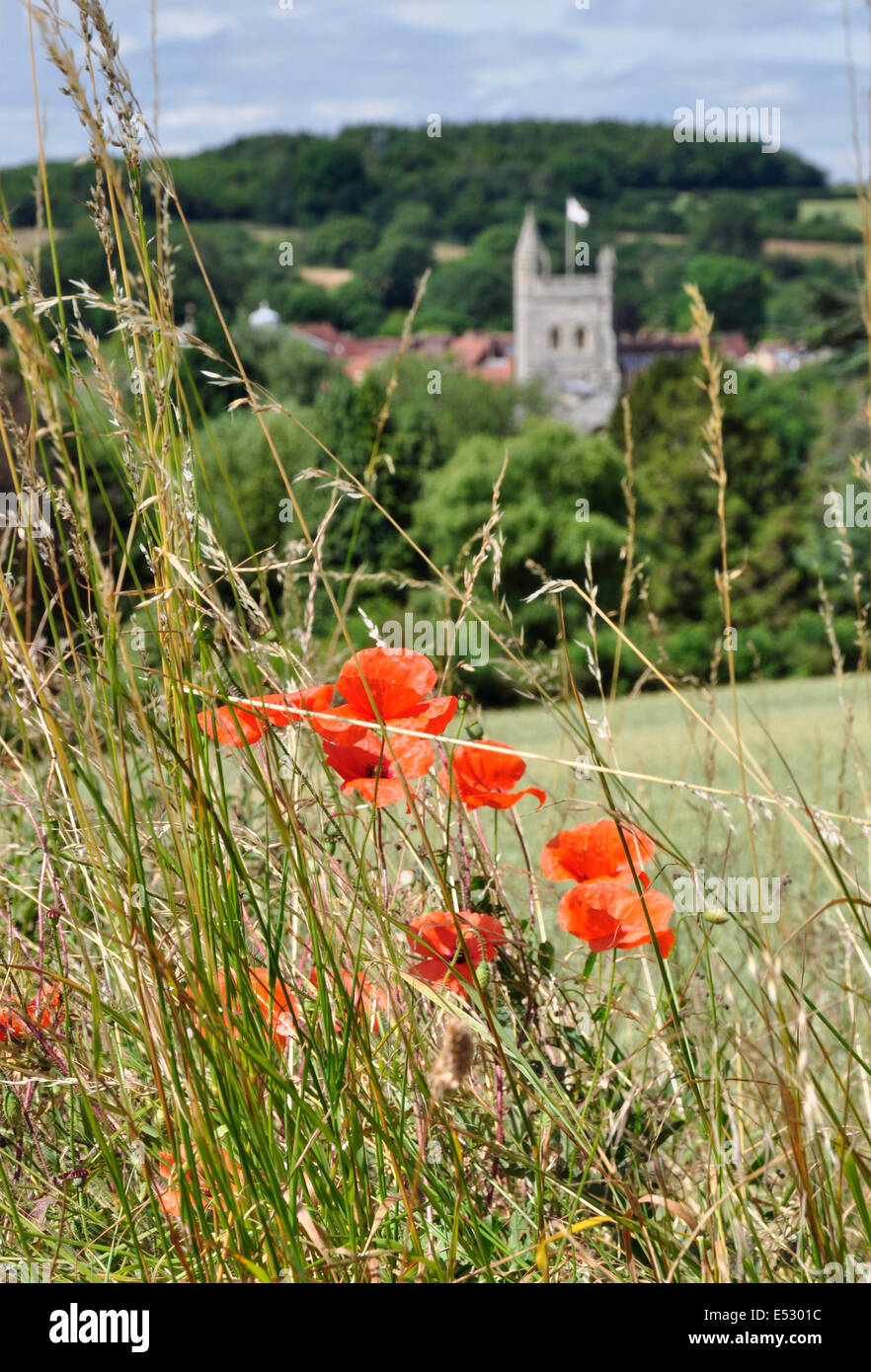 Bucks Chiltern Hills above Old Amersham - scarlet poppies - amid long grass - soft focus backdrop - church tower - Stock Image