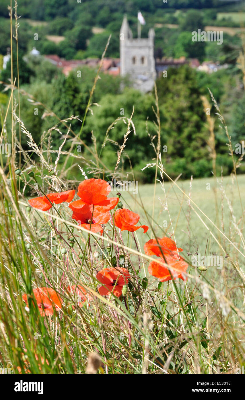 Bucks Chiltern Hills above Old Amersham -close up scarlet poppies - amid long grass -soft focus backdrop church - Stock Image