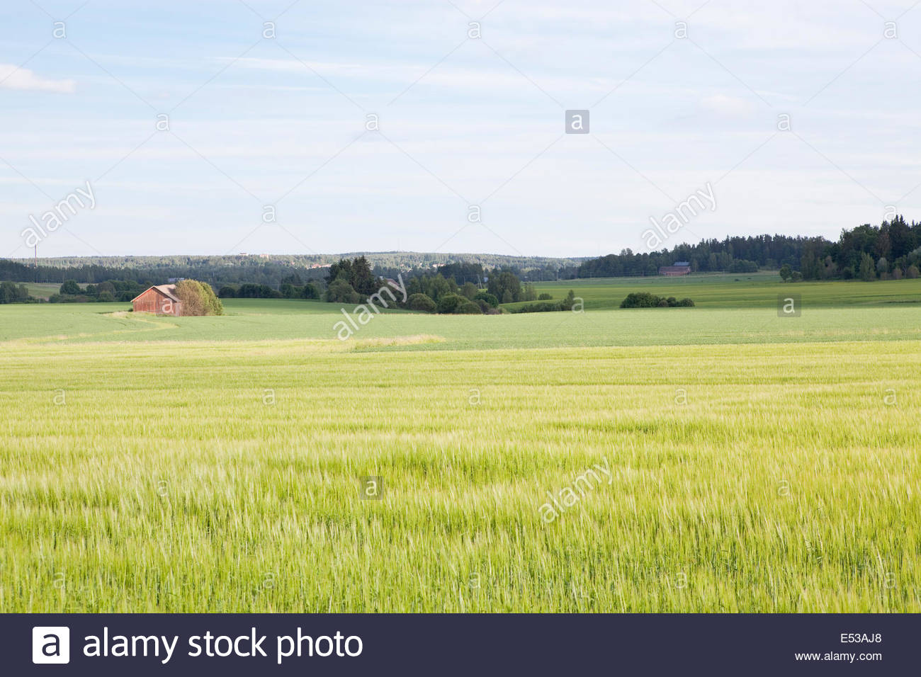 Sunny summer day in the country in Finland - Stock Image