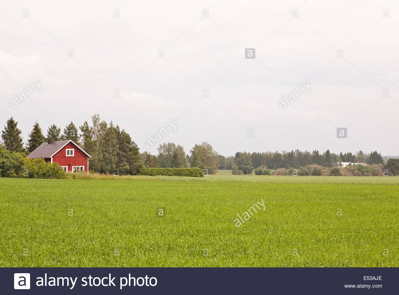 Red house in countryside in Finland - Stock Image