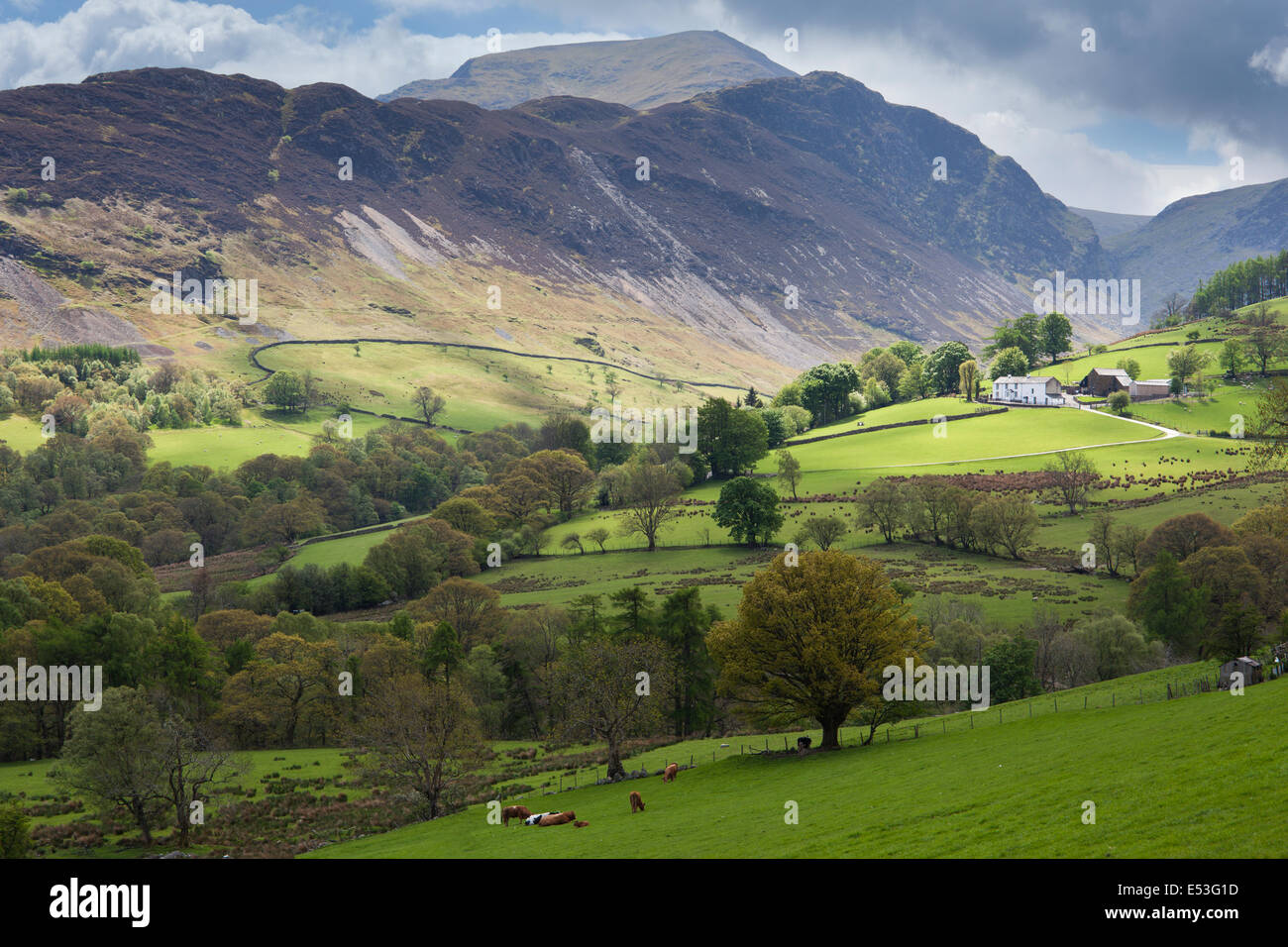 View through Newlands Valley towards the peak of Catbells, Lake District, Cumbria, UK - Stock Image