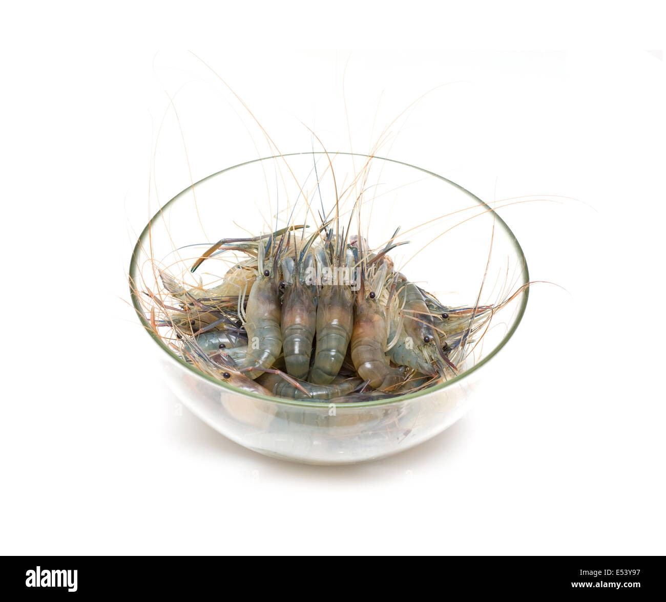 Live Shrimp High Resolution Stock Photography And Images Alamy
