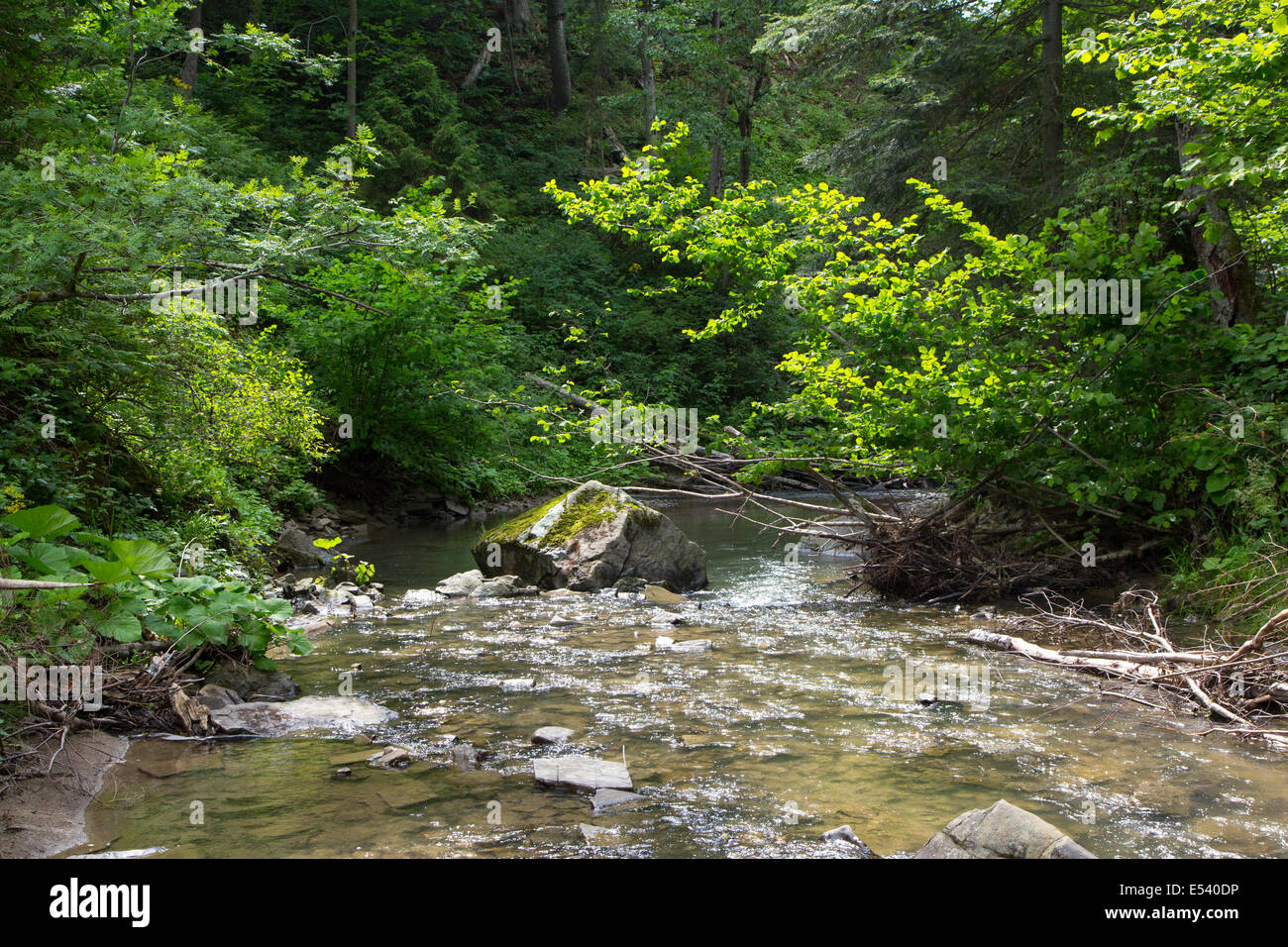 Peaceful forest stream flow down among stones in summer Bieszczady Region - Stock Image