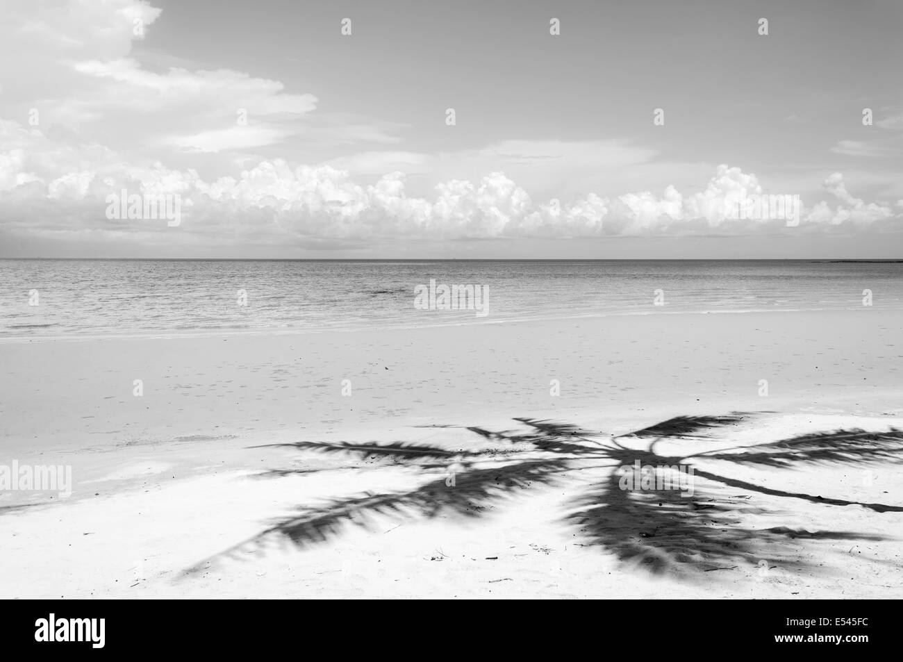 Shadow of palm tree over tropical white sand beach - Stock Image