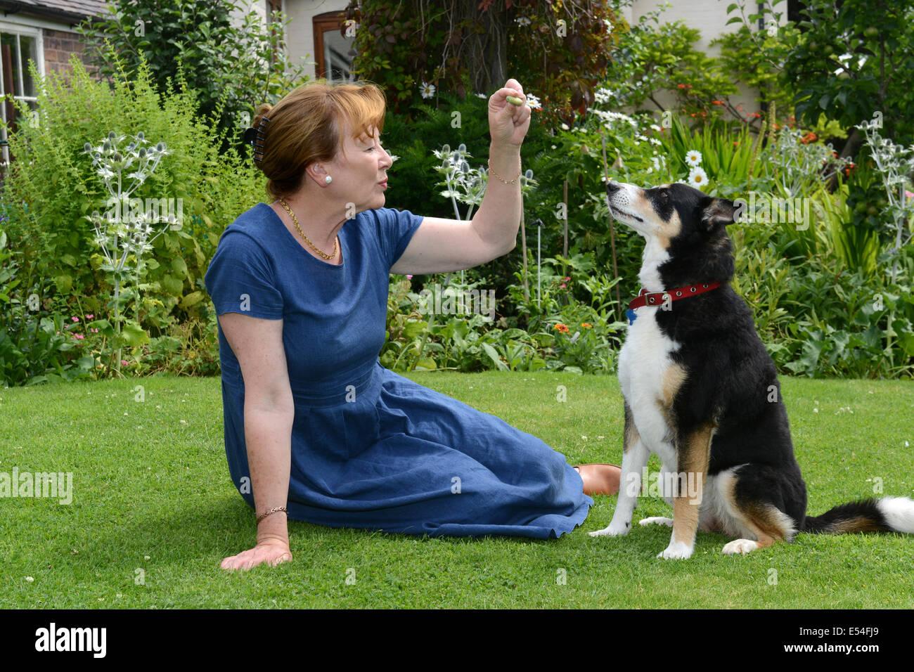 Woman with pet pets dog dogs female owner animal lover senior older uk - Stock Image