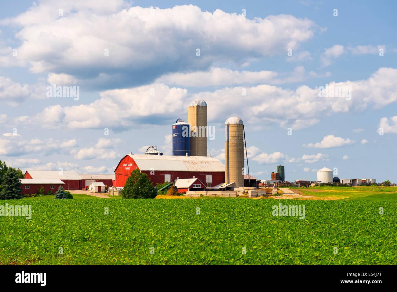 Canada Ontario Farm, Farms, Barns, Silos - Stock Image