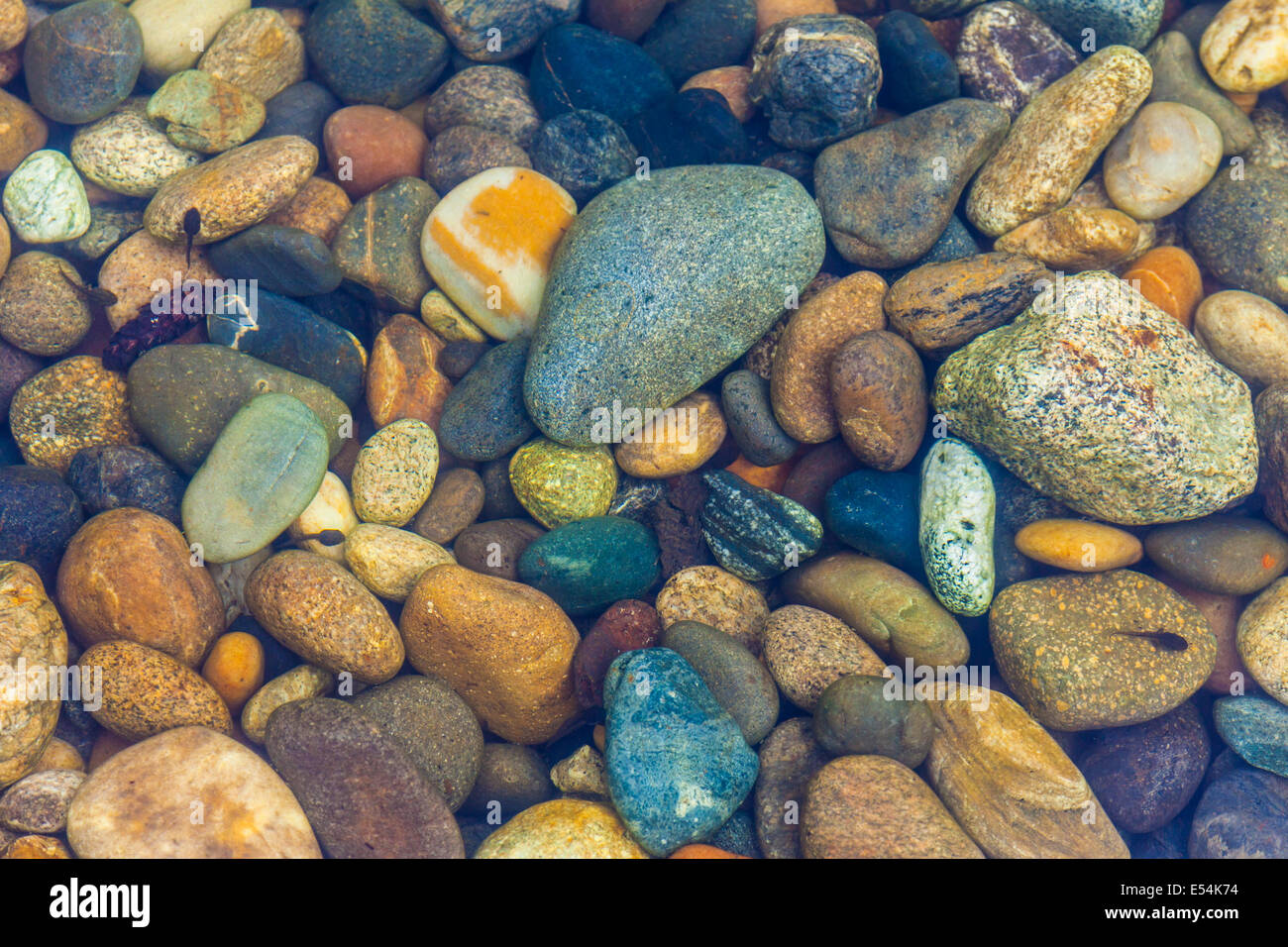 Tadpoles swimming in a stream of coloured pebbles - Stock Image