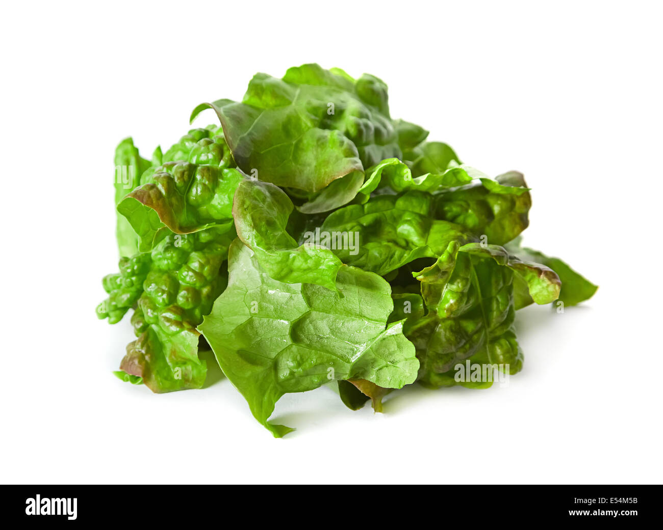 Ragged curly lettuce salad closeup isolated on white - Stock Image