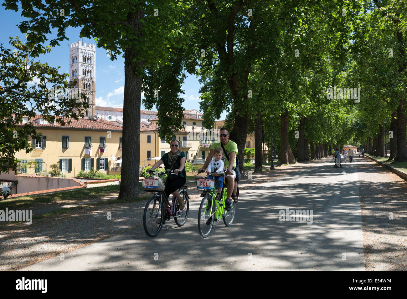 Cycling atop the city walls with the tower of the Duomo di San Martino, Lucca, Tuscany, Italy, Europe - Stock Image