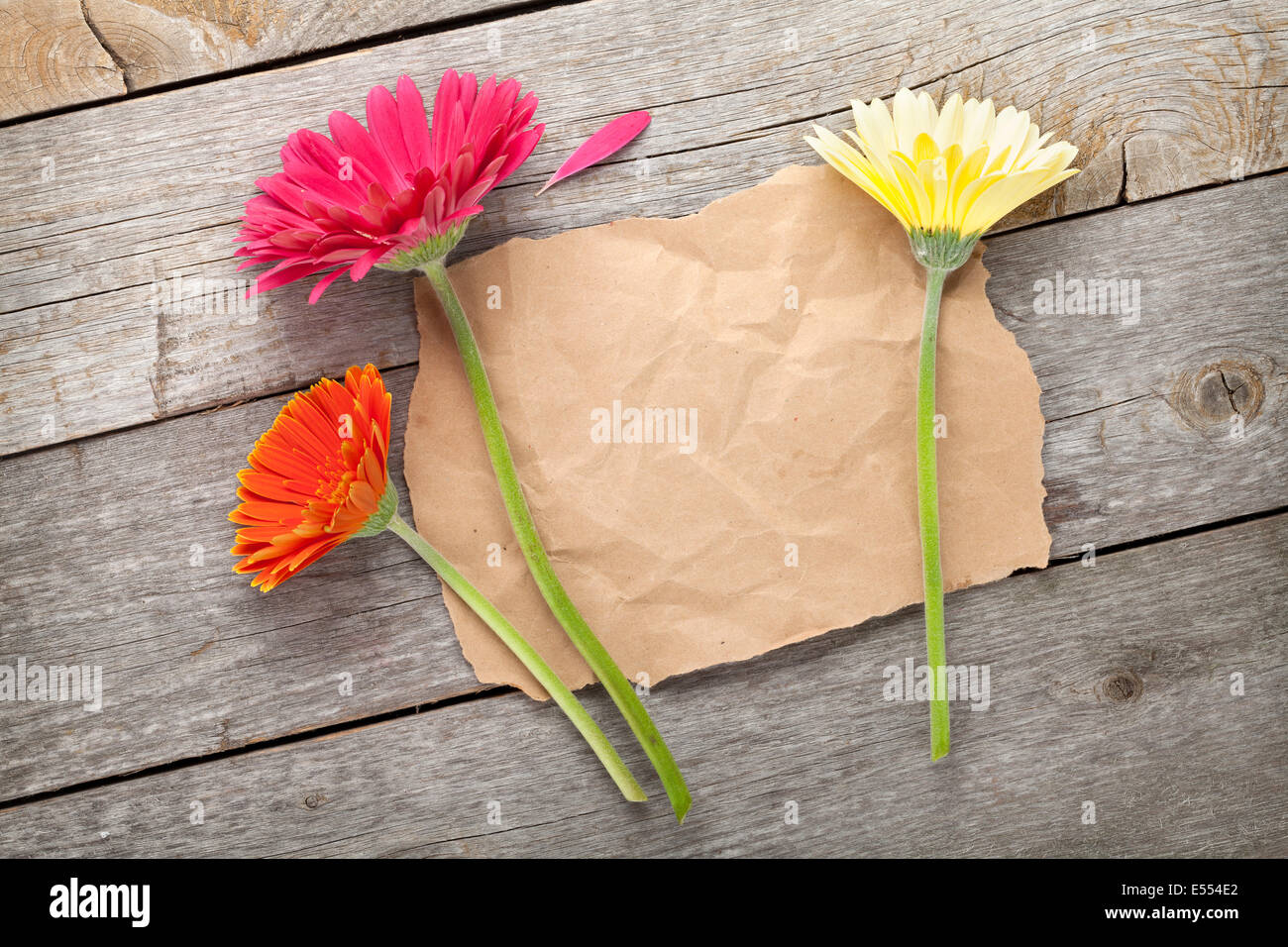 Paper Daisies Stock Photos Paper Daisies Stock Images Alamy
