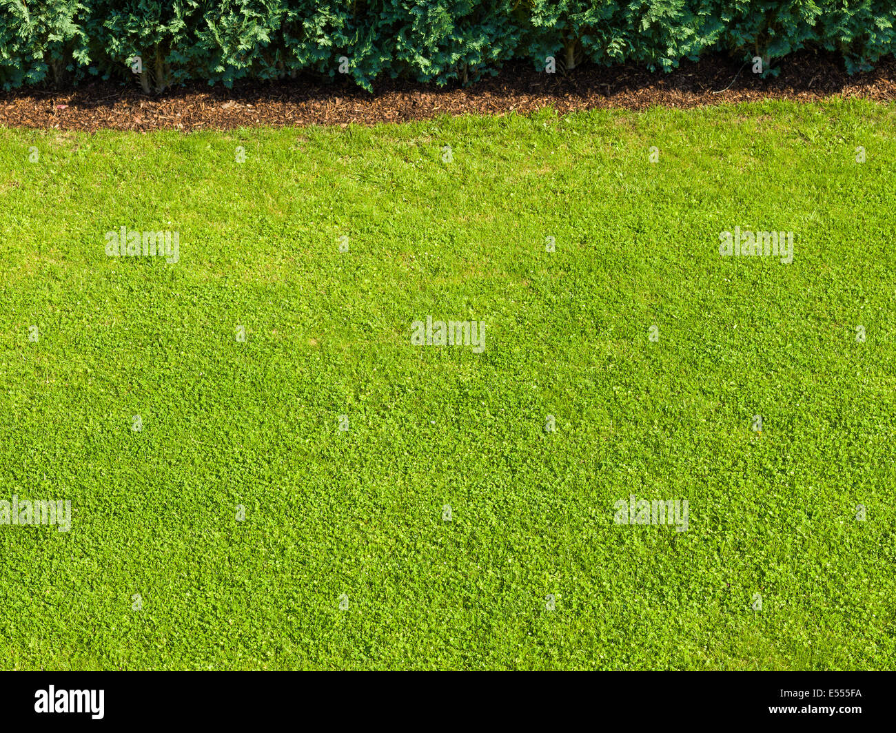 green lawn green grass garden nice bright good well trained perfect green fee golf bio organic rich - Stock Image