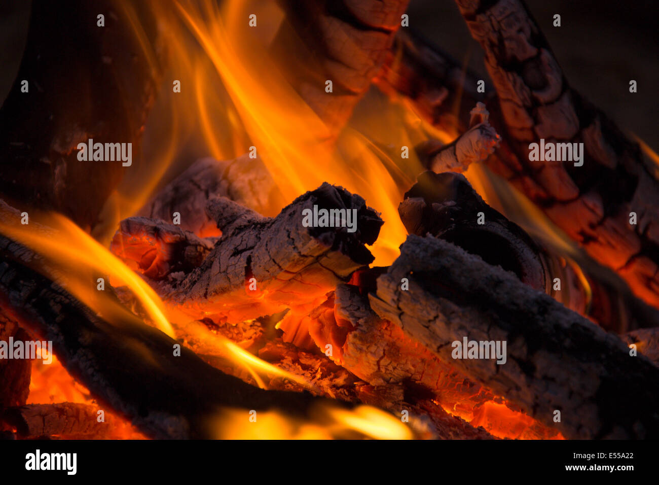 tree branches are burned in the fire - Stock Image