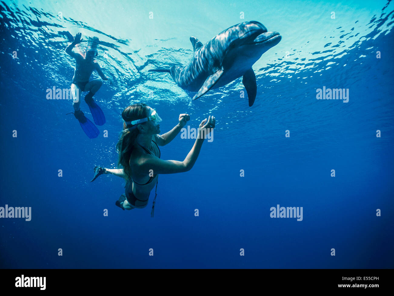 Dolphin trainer and child interacts with juvenile bottlenose dolphin (Tursiops truncatus). Dolphin reef, Eilat, - Stock Image