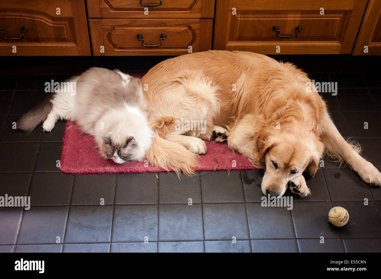 Two pets sleeping side-by-side - Stock Image
