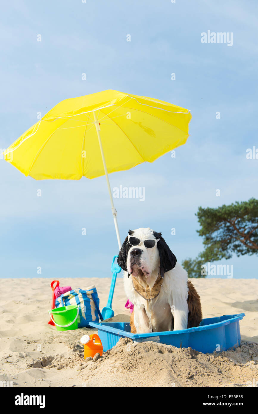 Funny Dog Is Having A Cooling Down With Water And Parasol At The Beach In Summer