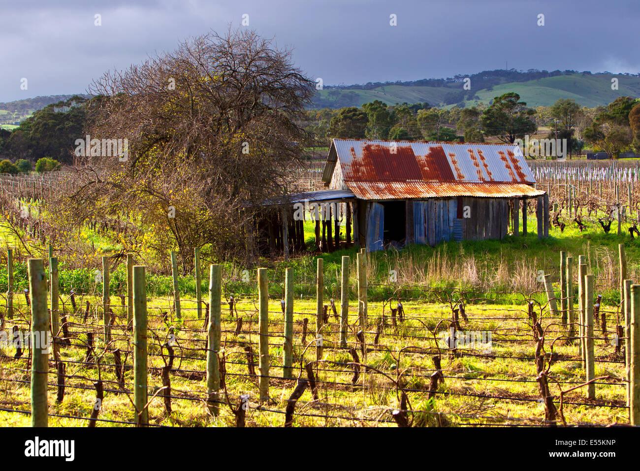 Vineyard old rusty tin shed clouds vines McLaren Flat South Australia Fleurieu Peninsula sunny day corrugated iron - Stock Image