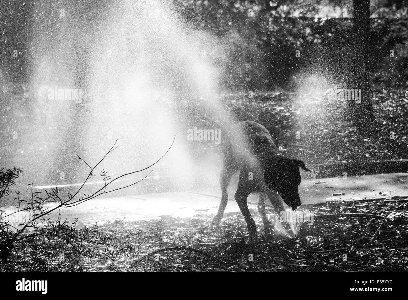 Dog playing and drinking from water leak Stock Photo