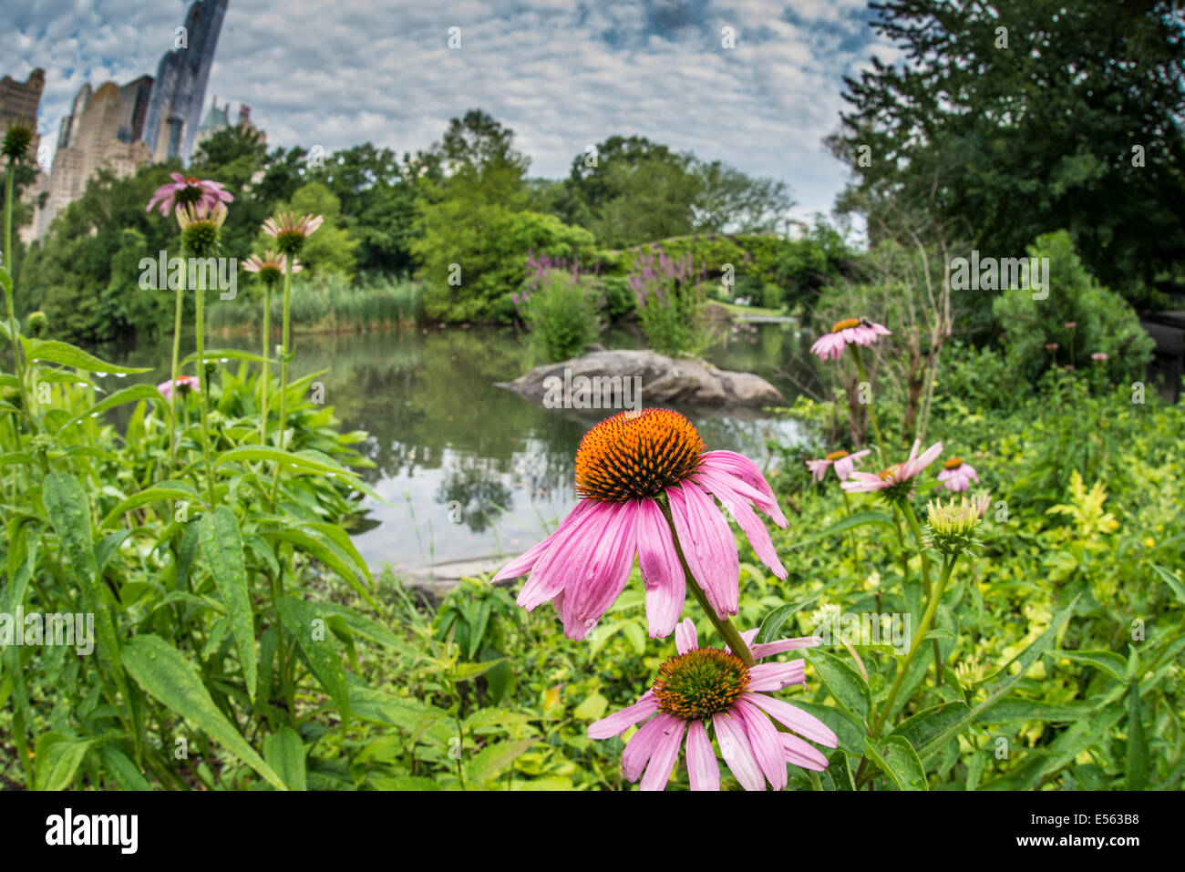 Central Park, New York City Gapstow bridge in summer - Stock Image