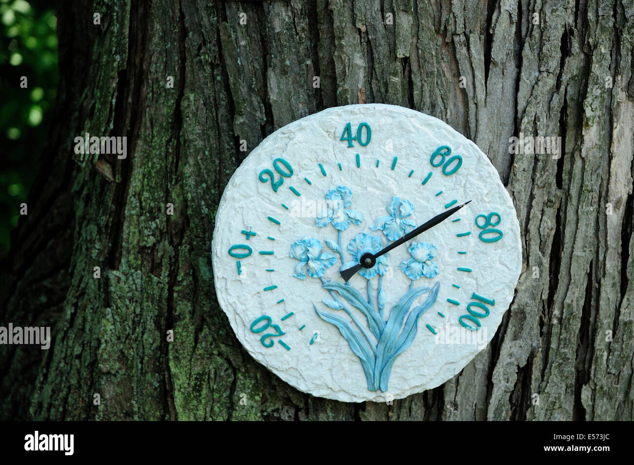 Outdoor garden thermometer on tree. - Stock Image