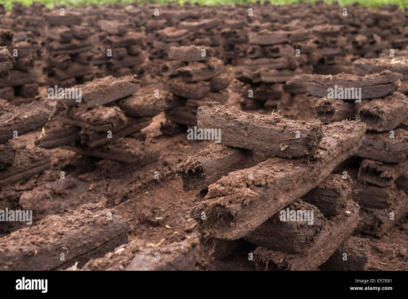 Turf stacks footed for drying to be burnt as fuel to keep houses heated in the winter months. Bog of Allen, Kildare, Stock Photo