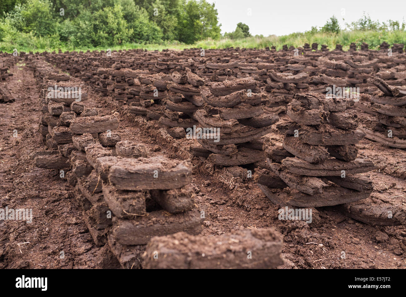 Turf stacks footed for drying to be burnt as fuel to keep houses heated in the winter months. Bog of Allen, Kildare, - Stock Image