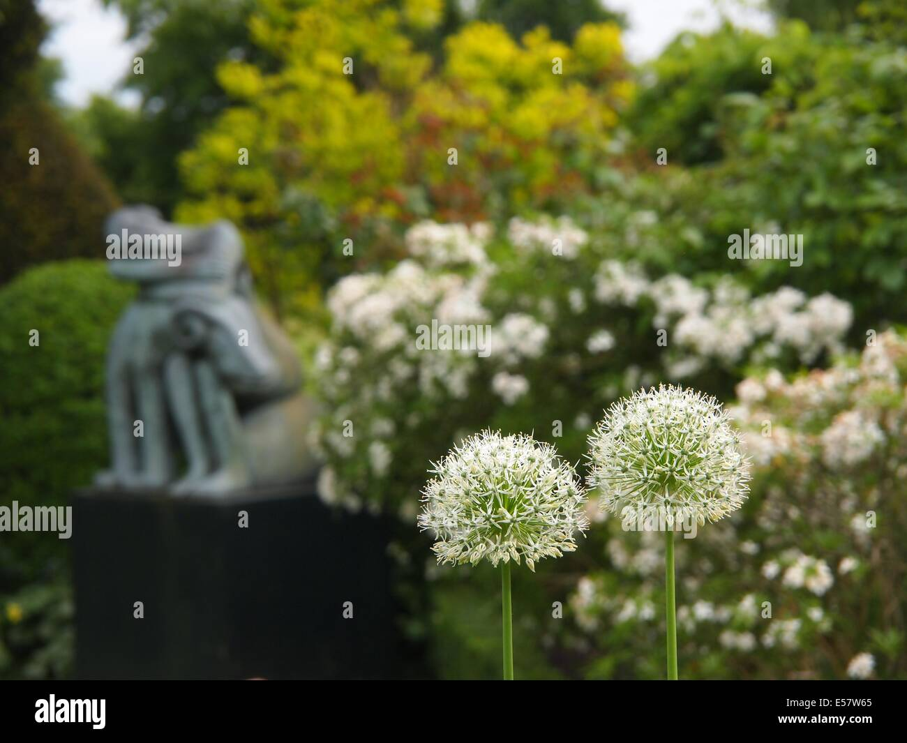 Chenies Manor Garden statue of a sleeping person with ram with white alliums in the foreground. This was taken in - Stock Image