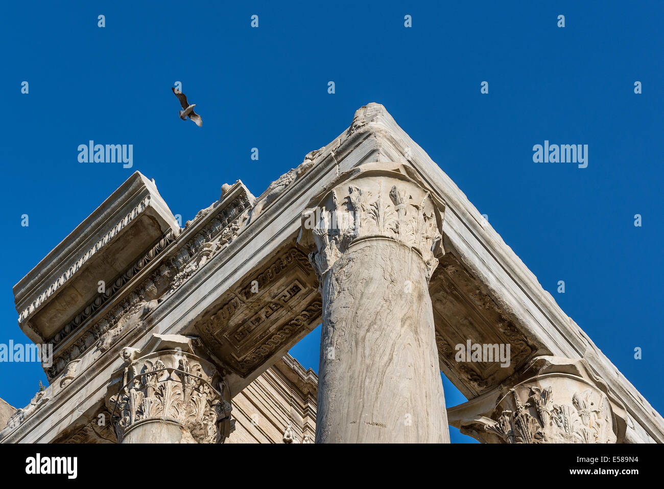 Corinthian column detail, Temple of Antoninus & Faustina, Roman Forum, Rome, Italy - Stock Image