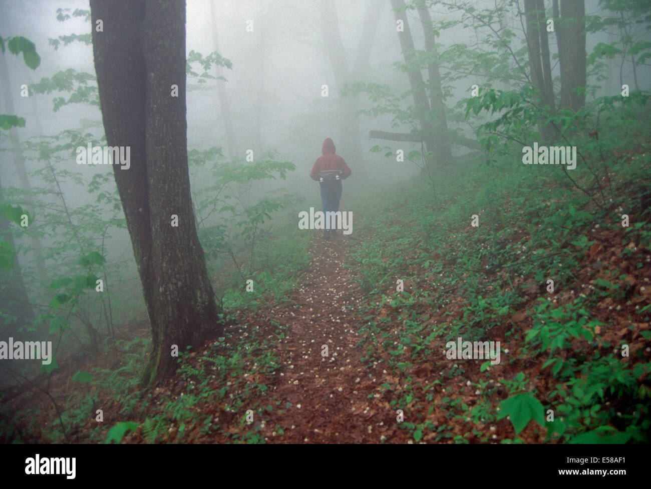 A hiker in the fog,Appalachian Trail,Tennessee - Stock Image