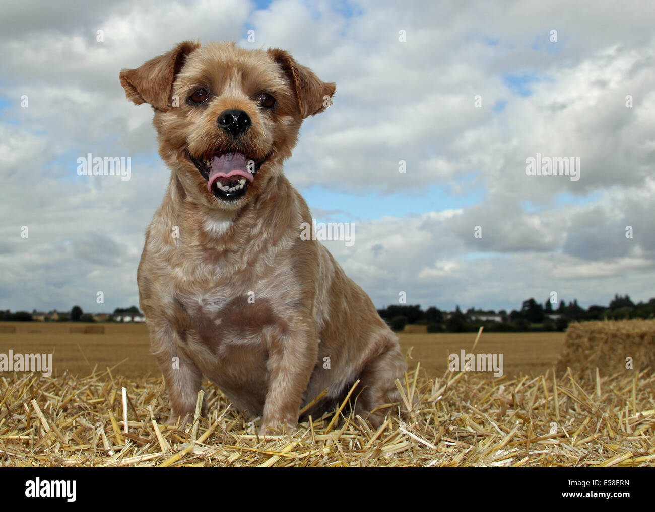 Dogs - Stock Image