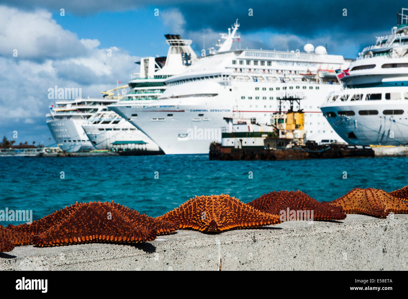 Starfish on wall in front of docked cruise ships - Stock Image