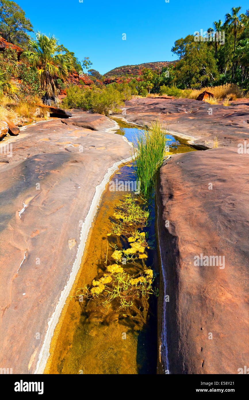 Palm Valley Central Australia Northern Territory - Stock Image