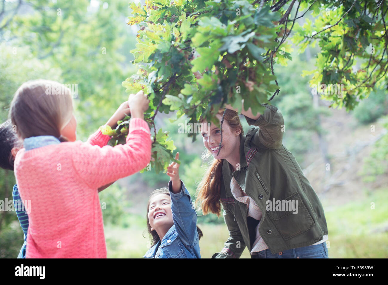 Students and teacher examining leaves outdoors - Stock Image