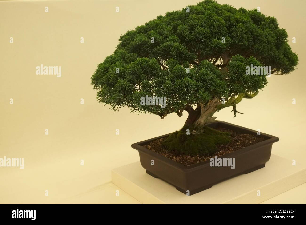 Bonsai Bowl High Resolution Stock Photography And Images Alamy