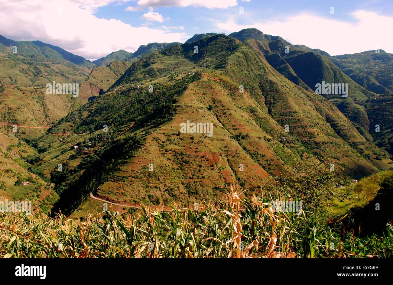 Yunnan Province, China:  Corn stalks and dramatic mountainsides covered with shrub brush and terraced cornfields - Stock Image