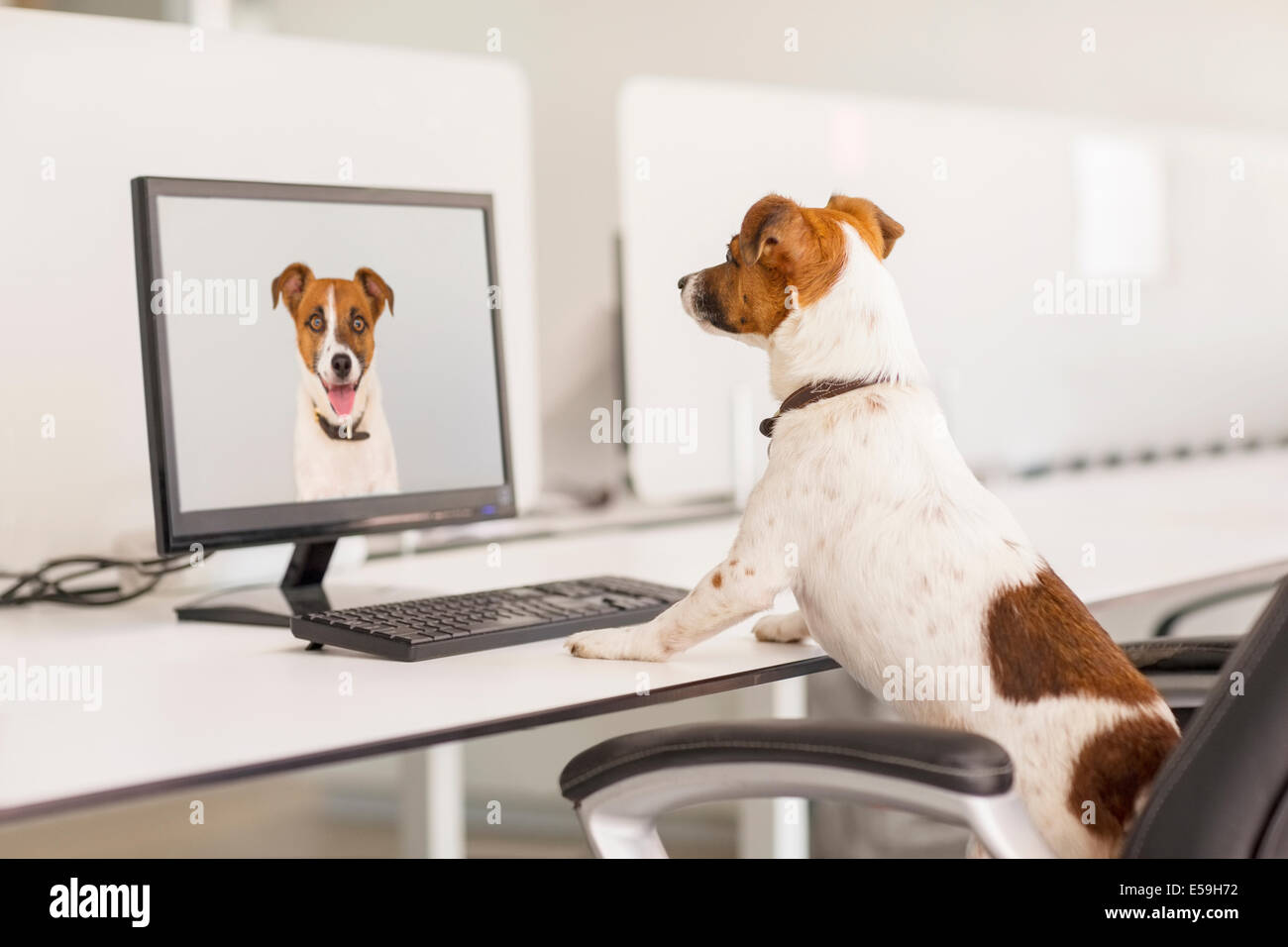 Dog standing at desk in office - Stock Image