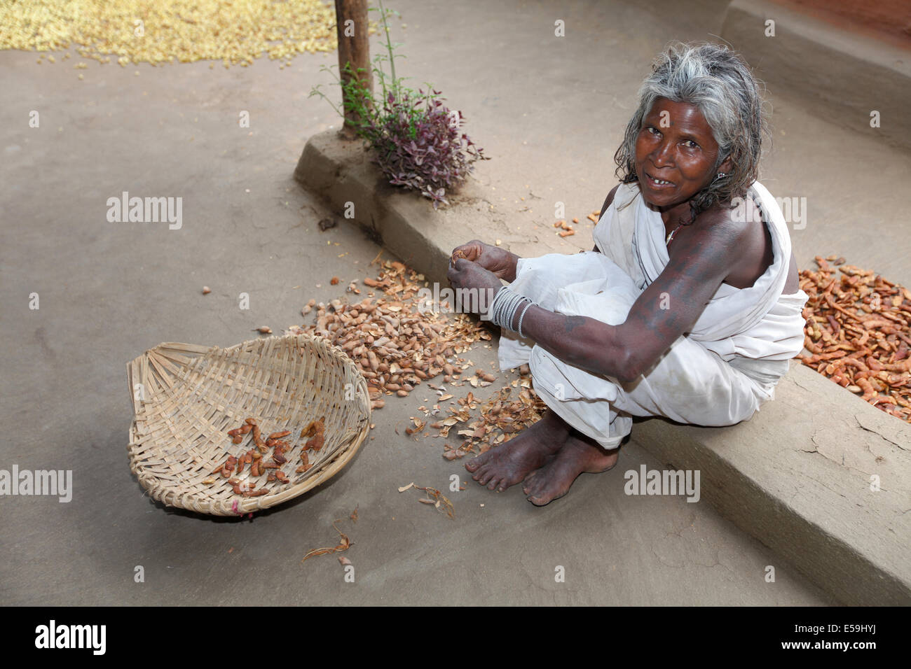 Old woman peeling tamarind, Bhunjia tribe, Kodopali Village, Chattisgadh, India - Stock Image