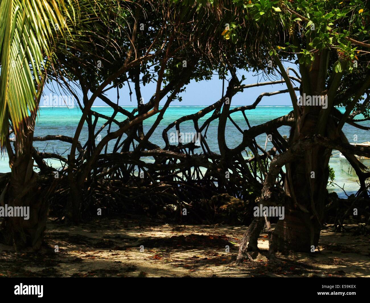 Ocean view and mangrove trees on Ambergris Caye, Belize - Stock Image